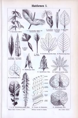 Der Stich aus 1893 zeigt 20 Darstellungen zum Thema Blattformen. Die Rückseite weitere 10.