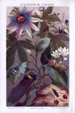 Chromolithographie aus 1893 zeigt 10 verschiedene Arten von Cikaden.