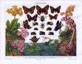 Chromolithographie zum Thema Darwinismus zeigt die Anpassungs am Beispiel verschiedener Insekten.