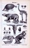 Die Stiche aus 1893 zeigen Funde aus der Zeit des Diluviums.