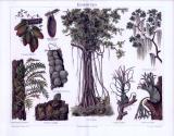 Chromolithographie aus 1893 zeigt verschiedene Abbildungen zum Thema Epiphyten.