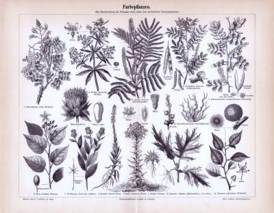 Stich aus 1893 zeigt verschiedene Farbepflanzen und deren lateinische Gattungsnamen.