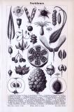Stich aus 1893 zeigt Früchte verschiedener Pflanzen.