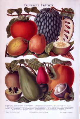 Chromolithographie aus 1893 zeigt die Früchte von 10 verschiedenen Obstsorten.