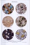 Chromolithographie aus 1893 zeigt Schnitte von 6...