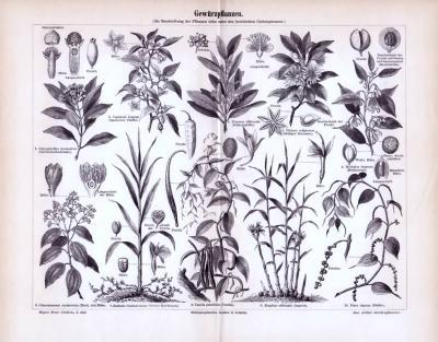 Stich aus 1893 zeigt 10 verschiedene Gewürzpflanzen.