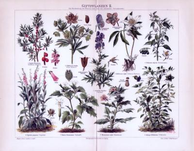 Chromolithographie aus 1893 zeigt 9 verschiedene Giftpflanzensorten.