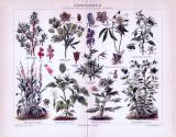 Chromolithographie aus 1893 zeigt 9 verschiedene...