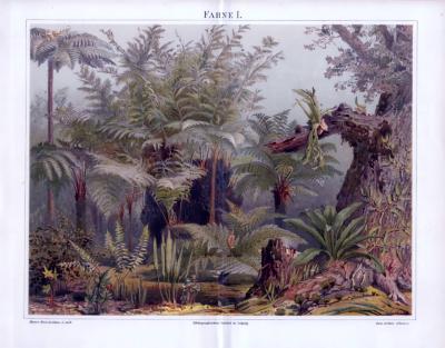 Chromolithographie aus 1893 zeigt in einem Landschaftsbild verschiedene Farne.