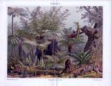 Chromolithographie aus 1893 zeigt in einem...