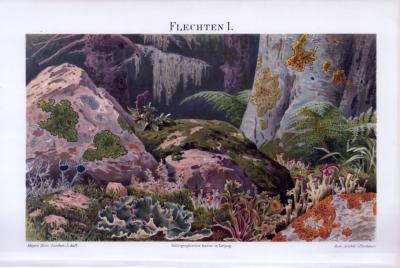 Chromolithographie aus 1893 zeigt verschiedene Arten von Flechten in einer Naturlandschaft.
