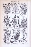 Futterpflanzen I. + II. ca. 1893 Original der Zeit