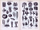 Stich aus 1893 mit verschiedenen Abbildungen von Gemüsepflanzen.