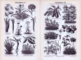 Gemüsepflanzen I. - IV. ca. 1893 Original der Zeit