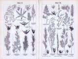Gräser I. - IV. ca. 1893 Original der Zeit