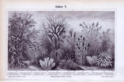 Stich aus 1893 zeigt Abbildungen verschiedener Sorten Gräser.