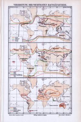3 farbig lithographierte Weltkarten aus 1893 zeigen die Verbreitung der wichtigsten Haussäugetiere.