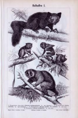 Stich aus 1893 zeigt verschiedene Affenarten in Naturszenerie.