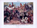 Chromolithographie aus 1893 zeigt 21 verschiedene...