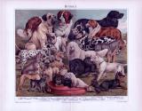 Chromolithographie aus 1893 zeigt 21 verschiedene Hundearten.
