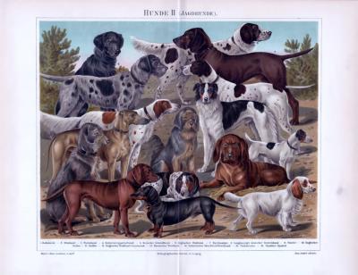 Chromolithographie aus 1893 zeigt 16 verschiedene Hundearten.