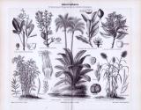 Stich aus 1893 zeigt 8 Sorten von Industriepflanzen inklusive lateinischer Gattungsnamen.