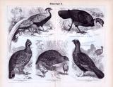 Hühnervögel I. - III. ca. 1893 Original der Zeit