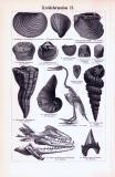 Kreideformation I. + II. ca. 1893 Original der Zeit