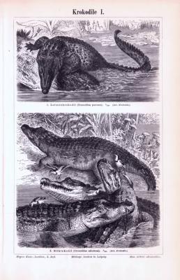 Stich aus 1893 zeigt verschiedene Krokodilarten.