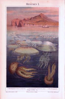 Chromolithographie aus 1893 zeigt Medusen in ihrem natürlichen Umfeld.