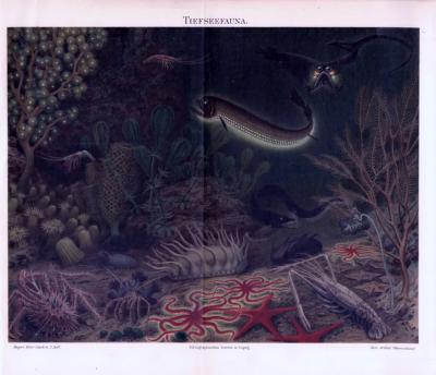 Chromolithographie aus 1893 zeigt Meerestiere der Tiefsee in ihrem natürlichen Umfeld.