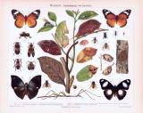 Chromolithographie aus 1893 zeigt Insekten und deren...