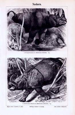 Stich aus 1893 zeigt Doppelnashorn und Indisches Nashorn in Naturszenerie.