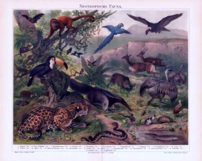 Chromolithographie aus 1893 zeigt Tiere aus der neotropischen Faunazone.