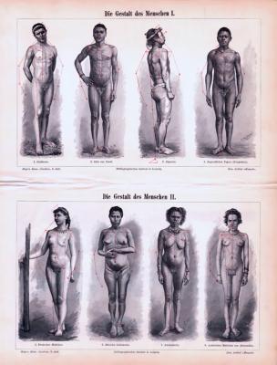 Stich von 1893 zeigt Abbildungen von Männern und Frauen zum thema Anatomie und Proportion.