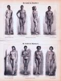 Stich von 1893 zeigt Abbildungen von Männern und Frauen...
