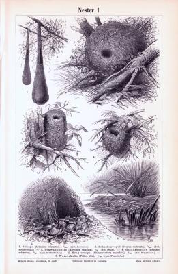 Stich aus 1893 zeigt Nestbauten verschiedener Vogelarten.