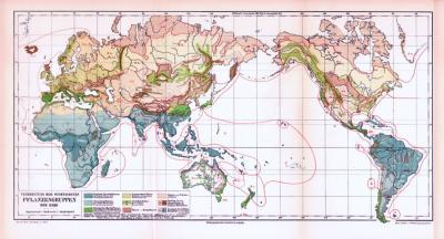 Farbig illustrierte Landkarte der weltweiten Verbreitung der Pflanzengruppen aus 1893.