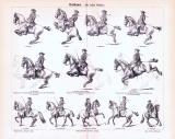 Stich aus 1893 zeigt die Hohe Schule der Reitkunst in 12 verschiedenen Figuren.