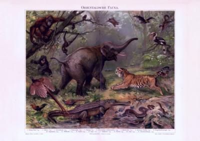 Chromolithographie aus 1893 zeigt verschiedene Tiere aus der Orientalischen Fauna in natürlicher Umgebung.