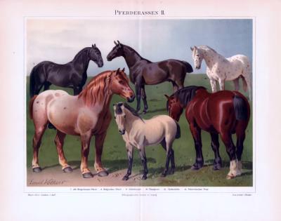 Chromolithographie aus 1893 zeigt 6 verschiedene Pferderassen.