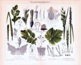 Chromolithographie aus 1893 zeigt verschiedene Pflanzenkrankenheiten.