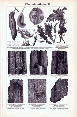 Stich aus 1893 zeigt verschiedene Pflanzenkrankenheiten.