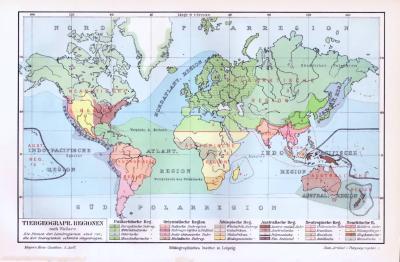 Farbige Lithographie der tiergeographischen Regionen der Welt aus dem Jahr 1893.