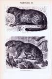 Pantherkatzen I. + II. ca. 1893 Original der Zeit