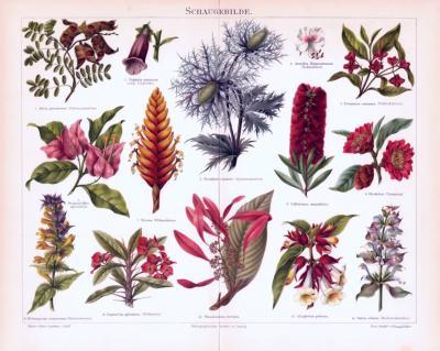 Chromolithographie aus 1893 zeigt Blüten verschiedener Pflanzenarten.