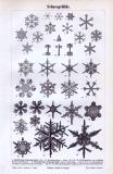Stich aus 1893 zeigt verschiedene Formen von...