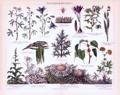 Chromolithographie aus 1893 zeigt Schutzeinrichtungen verschiedener Pflanzenarten.