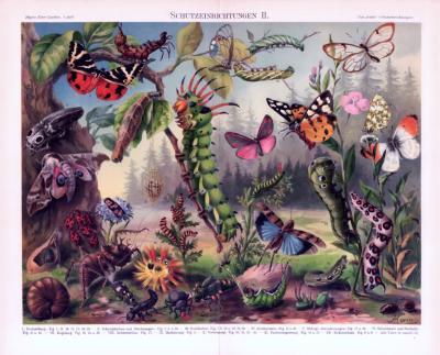 Chromolithographie aus 1893 zeigt Schutzeinrichtungen verschiedener Insekten.