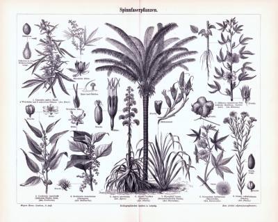 Stich aus 1893 zeigt Spinnfaserpflanzen und deren Früchte, Blüten und Samen.